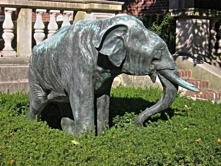 owpc-elephant-4
